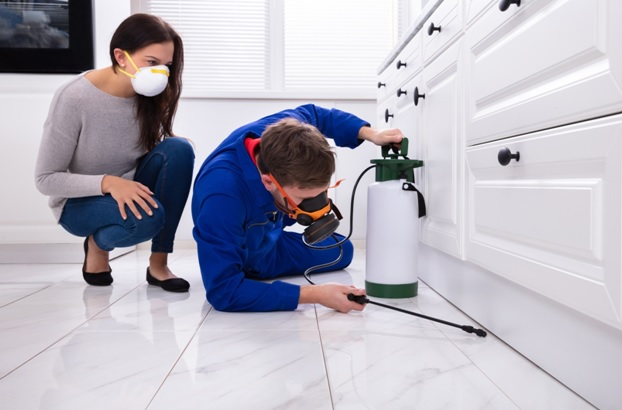 How to Prevent Termite Infestation at your Home